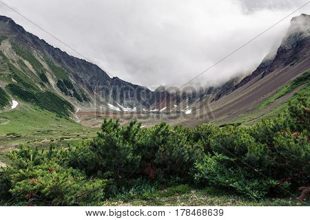 Evergreen shrubs Pinus Pumila growing in mountain circus of picturesque Mountain Range Vachkazhets with rocky slopes in cloudy weather. Kamchatka Peninsula Russian Far East Eurasia.