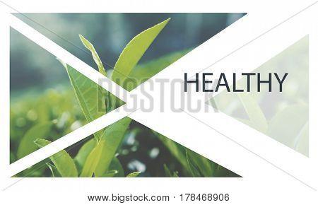 Fresh Food Healthy Lifestyle Organic