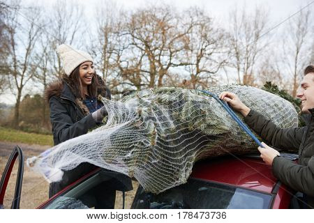 Young couple tying a Christmas tree to the roof of a car