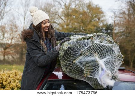 A young woman holding a Christmas tree to tie to roof of car