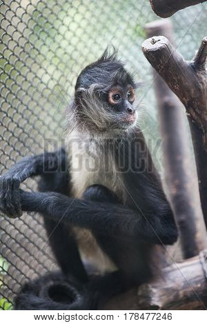 sad monkey sitting on a branche in a cage