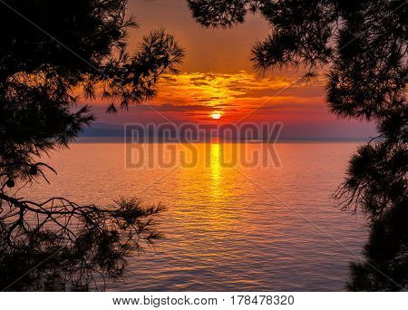 view of the sunset through pine trees in a small village Brela Croatia