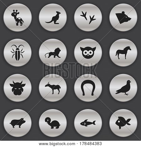 Set Of 16 Editable Zoo Icons. Includes Symbols Such As Pigeon, Talisman, Night Fowl And More. Can Be Used For Web, Mobile, UI And Infographic Design.