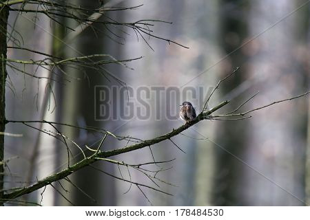 Songbird / A bird sits on a tree