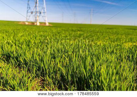 Electricity Pylons On A Farm Field