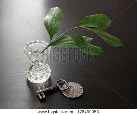 Green branch in crystal vase ancient steel key and old silver coin on wooden table Low key tone still life in vintage style.