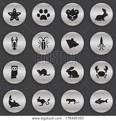 Set Of 16 Editable Animal Icons. Includes Symbols Such As Wildlife Castor, Sea Star, Crawfish And More. Can Be Used For Web, Mobile, UI And Infographic Design.