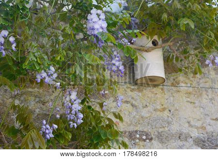 Wisteria blossom on old wall and birdhouse