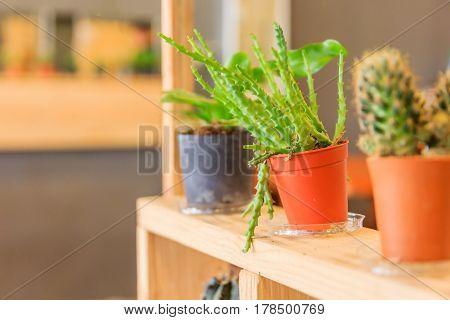 Wood shelf with cactus collection in flower pot in colorful flower pots on wooden table