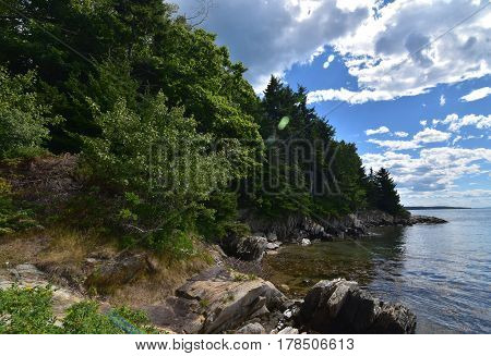 Trees and foliage along the coast of an island in Casco Bay Maine.