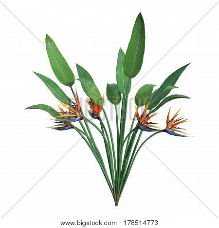 3D rendering of a strelitzia plant or bird of paradise flower isolated on white background