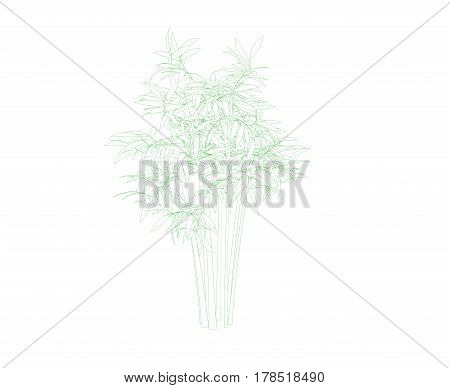 Bamboo tree. Isolated on white background. Sketch illustration.