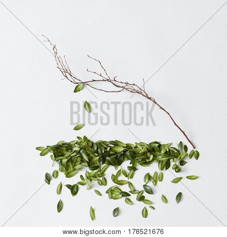 Tree with leaves falling