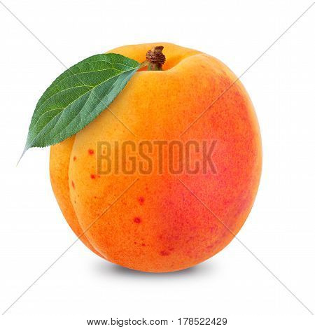 One apricot isolated on a white background