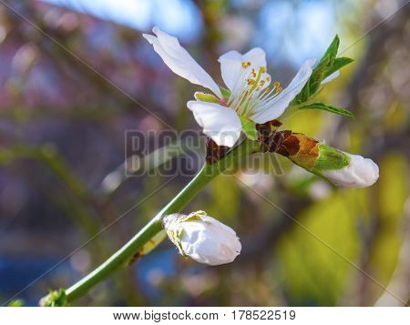 Real nice blooming flower of the fruit tree