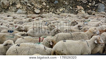 Flock Of Sheep On The Mountain