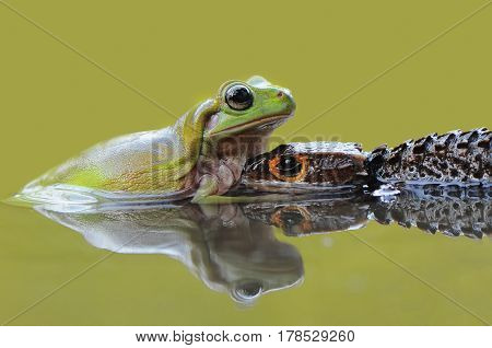 Croc and Frog in the water reflection