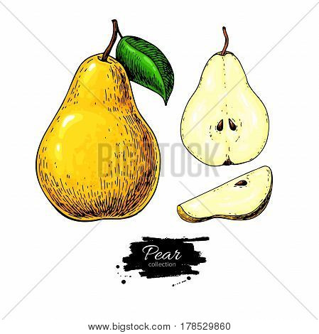 Pear vector drawing. Isolated hand drawn full pear and sliced pieces set.  Summer fruit artistic style illustration. Detailed bright vegetarian food. Great for label, poster, print