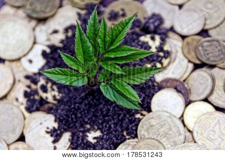 Green plant sprouting from the earth and coins