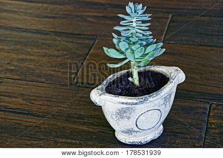 House plant in a clay pot on a wooden brown floor