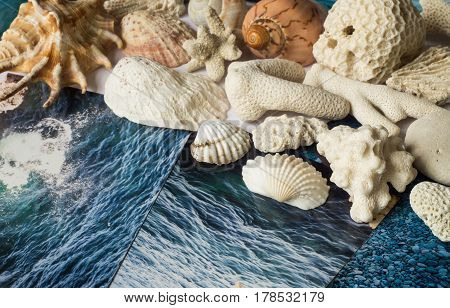 Shells and pictures with the images of the sea