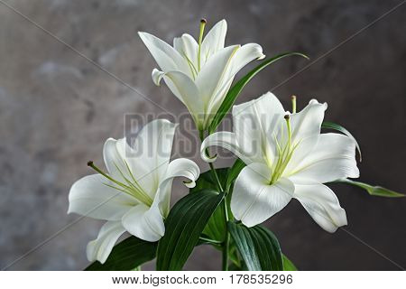 Beautiful white lilies on blurred background