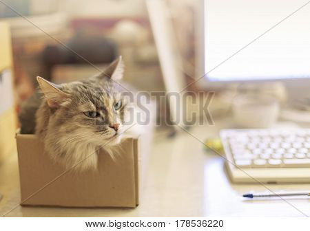 A cat sitting in the box in a home office near monitor