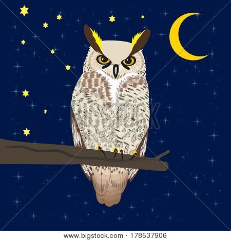 Owl sits on a tree branch under the moon and starry sky