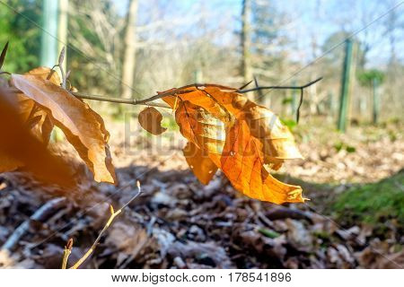 fallen leaves, dead leaves on forest floor