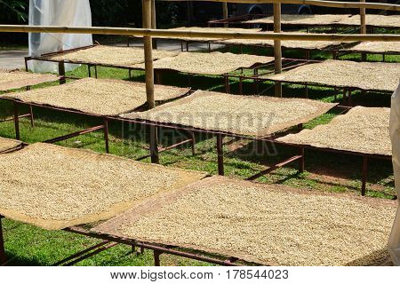Process of drying coffee beans (parchment coffee) sun dry the beans. This is natural and the most ecological