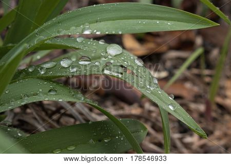 Blade leaves with water droplets collected on them.