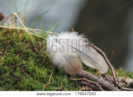 close photo of two small bird feathers