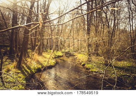 small stream running through woods plant life in spring