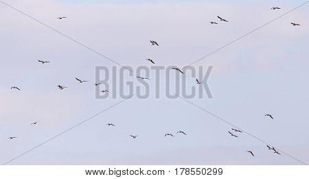 a flock of birds in the sky .