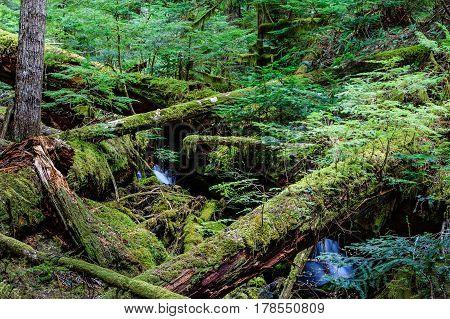 Mt. Rainier Washington is a scenic wonder.