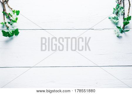 Background of wood planks painted in white. Bunches of blooming apple tree and young black current twigs in upper corners