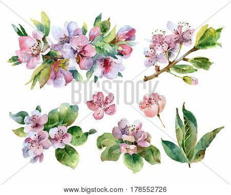 Set of isolated flowering branches with pink flowers. Watercolor illustration