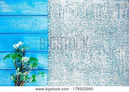 Background of burlap on narrow wood planks painted in blue. Bunch of blooming apple tree and young black current twigs
