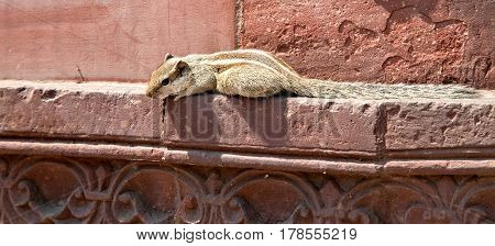 Chipmunk eats from the hands of a man and rests on the rocks