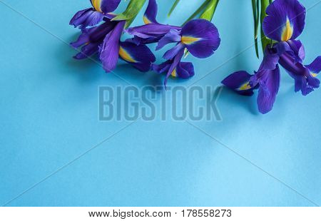 Spring Flower Frame Made From Iris. Flat Lay