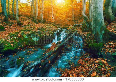 colorful waterfal autumn forest  landscape in mountains, Europe sunrise morning