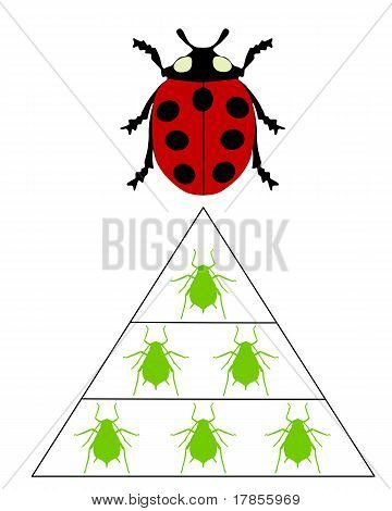Detailed and colorful illustration of ladybird diet pyramid poster