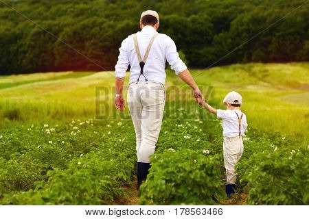 Father And Son Farmers Walking Along The Potatoes Rows Among Green Fields