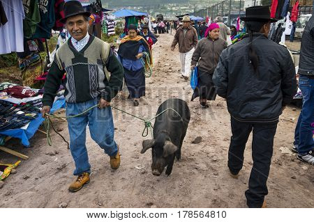 Otavalo Ecuador - February 1 2014: Man with a pig at the livestock market of the town of Otavalo in Ecuador.