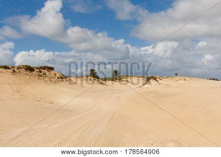 Sand dunes and palm trees of Mangue Seco Jandaira Bahia Brazil