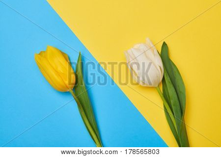 Top view of two tulips lying on different flatlays