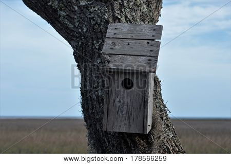 wooden bird house tree trunk forefrunt against marsh grass water and sky