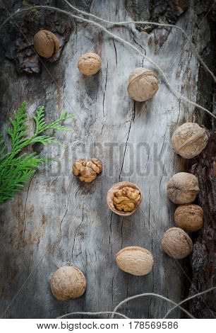 Walnuts On Aged Wood From A Branch Of The Thuja