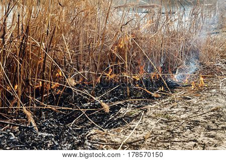 Strong Fire In The Forest On The Lake. A Lot Of Smoke On The Background Of The Trees. Ashes, And Fir