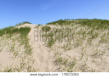 Path Over Sand Dune on Summer Morning